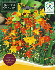 More details for 10 crocosmia mixed gardening bulb beautiful spring summer flower perennial new