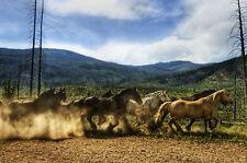 Stampa incorniciata-Confezione da cavalli selvaggi in esecuzione nel fango (foto poster Arte Animale