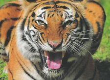 Endangered Big Cats Malaysia 2013 Tiger Leopard Wildlife Panther (Stamp Folder)