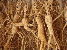 60g AAAA 100% nature/100% sun dry 30 years wild ginseng/insam/ninjin root  gift