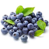 50 Samen Heidelbeere (Vaccinium myrtillus) Blaubeere, leckere Früchte, Wald