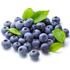 30 Samen Heidelbeere (Vaccinium myrtillus) Blaubeere, leckere Früchte, Waldbeere