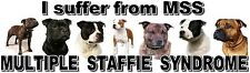 """I Suffer from MULTIPLE  STAFFIE  SYNDROME"" Dog Car Sticker by Starprint"