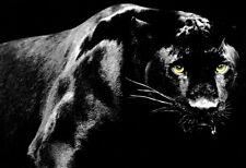 Black Panther Poster, Big Cat, Panther, Jaguar, Leopard