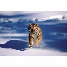 SIBERIAN TIGER IN SNOW - NATURE POSTER 24x36 RUNNING ACTION 4885