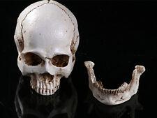 White Mini Resin Replica Life Human Fine Arts Skull Medical Statue Figurine Toys