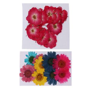 20pcs Natural Dried Flower Chrysanthemum Rose for Resin Casting DIY Ornament