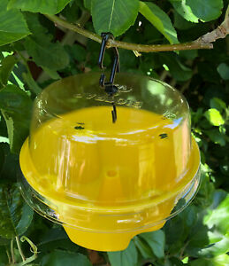 Biotrap Fruit Fly Trap Kit for Home Gardens - Organic Trap and Stick System