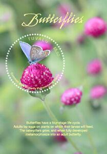 Tuvalu 2017 - Butterflies - Souvenir Sheet - MNH