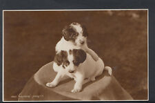 "Animals Postcard - Two Cute Puppy Dogs - ""Playmates""    RS6489"