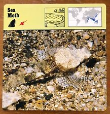 """SEA MOTH"" 1977 EDITIONS RECONTRE COLLECTIBLE 4 3/4"" x 4 3/4"" CARD"
