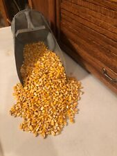 3 Lbs Dry Shelled Corn For All Livestock. Grown In Tn