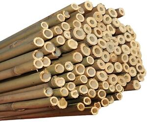 HEAVY DUTY STRONG BAMBOO Canes Garden Plant Support Trellis Pole Stake Sticks HQ
