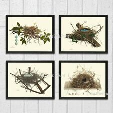 Unframed Bird Nest Eggs Print Set of 4 Antique Nature Home Wall Art Decor