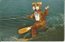 "ag(E) Cypress Gardens, FL: ""Timmy the Tiger"""