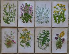 LOT of 8 RARE Pratt Antique Botanical CHROMOLITHOGRAPH Prints FLOWERING PLANTS