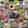 100pcs Succulent Seeds Lithops Rare Living Stones Plant Cactus Home Plant CombSH