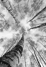STUNNING CANVAS BLACK & WHITE FOREST #379 ABSTRACT A1 WALL HANGING PICTURE ART