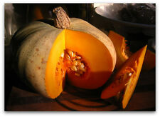 10 SWEET MEAT SQUASH 2021 (all non-gmo heirloom vegetable seeds!)