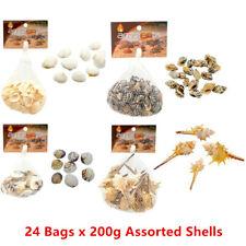 Small Decorative Sea Shell Conch Snail Clam Home Aquarium Fish Tank Craft Art