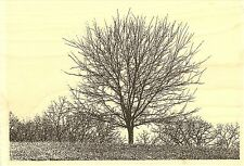 Tree Line, Wood Mounted Rubber Stamp IMPRESSION OBSESSION - NEW, J16196