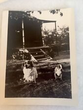 Vintage 1920's Dog Great Photo Lot Boston Terrier Cat Others
