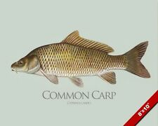 COMMON CARP FISH PAINTING FRESHWATER FISHING ART REAL CANVAS PRINT
