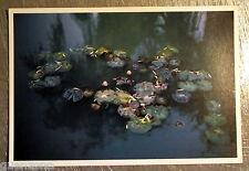 Carte postale Giverny hommage a Monet nympheas photo Batho John  postcard