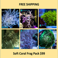 Live Soft Coral Frag Pack Free Shipping (Saltwater)