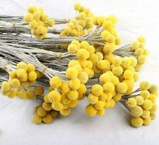 10pcs Dried Natural Flower Craspedia Yellow Balls Sticks Home Décor