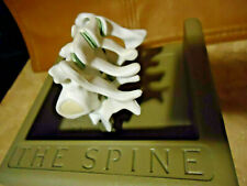 Spine, Cervical, Anatomical Model Medical Science Structure Educational Teaching