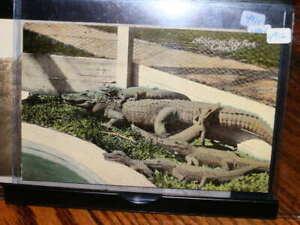 #4912,Seldom Seen Cd,1913,Alligator City Park Lima Ohio
