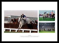 Desert Orchid Montage Horse Racing Legends Photo Memorabilia (DOMU01)