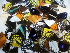 Mixed lot of 75 REAL tropical butterfly wings for art, crafts, jewelry