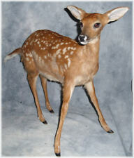 BEAUTIFUL WHITETAIL FAWN LIFE SIZE TAXIDERMY MOUNT RARE