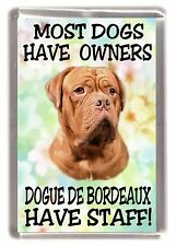 "Dogue de Bordeaux Dog Fridge Magnet ""Most Dogs .. Dogue de Bordeaux Have Staff"""