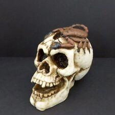 Skull Head With Scorpion Skull Figurine Spooky Statue
