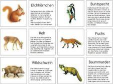 Waldtiere, Bild- u. Infokärtchen, Montessori Freiarbeit