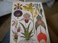 Large BOTANICAL Prints  Botanical Print Lot  10 10 x 14.5