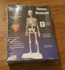 Human Skeleton (Model, Level 2) Lindberg Science Kits Anatomically Accurate NEW