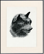 SCHIPPERKE OLD DOG HEAD STUDY PRINT FROM 1935 MOUNTED READY TO FRAME