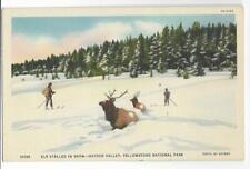 Elk Stalled In Snow~Hayden Valley,Yellowstone National Park