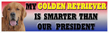 Golden Retriever smarter than the president bumper sticker
