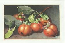 137901 stupenda cartolina artistica frutta di s. bonelli