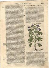 Stampa antica ERBARIO MATTIOLI MATTHIOLI STAPHIS AGRIA 1580 Old antique print