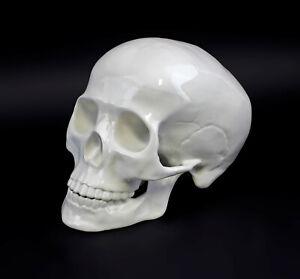 9944274 Porzellan menschlicher Schädel Totenkopf weiß Kämmer 22x15x15cm