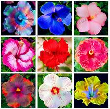 100 PCS Seeds Hibiscus Bonsai 24 Kind Color Garden Flowers Plants Free Shipping