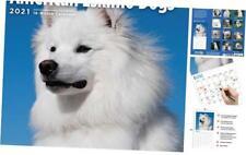 2021 American Eskimo Dogs Wall Calendar by Bright Day, 12 x 12 Inch, Cute Dog