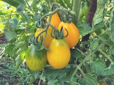 Lot de 20 graines de tomate cerise poire jaune (BIO)
