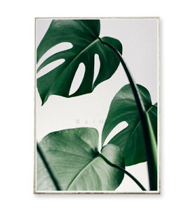 MONSTERA Kunstdruck Poster Bild Blatt Pflanze tropisch Philodendron Fotografie
